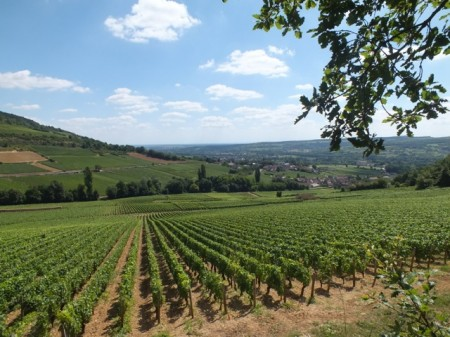 Vineyards above Santenay