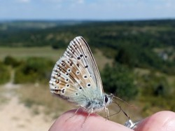 A local butterfly