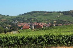 Vineyards near Colmar