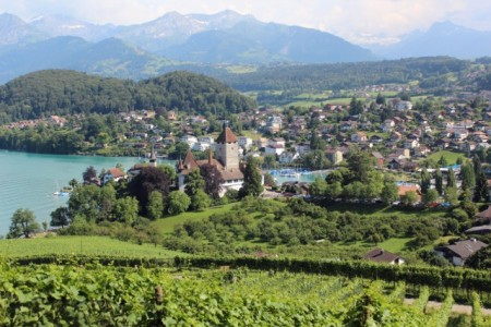 The vineyards above Spiez