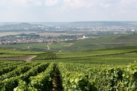 Champagne vineyards as far as you can see