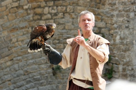 Birds of prey demonstration