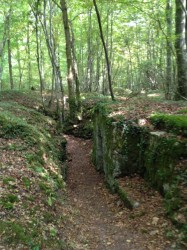 "The ""Bavarian"" trenches in the Apremont Forest"