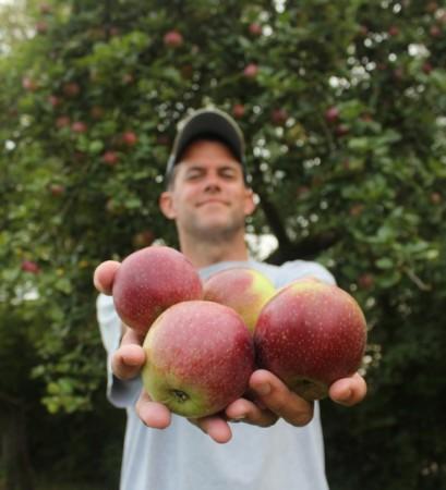 Free apples in Stenay