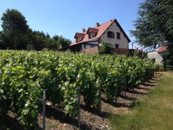 Our favorite vineyard in Champagne