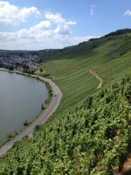 Steep vineyards in the Mosel valley