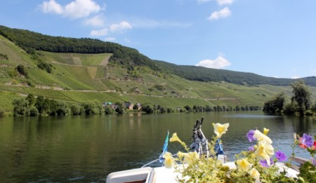 Very steep vineyards in the Mosel River valley