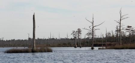 Swampland upstream on the Alligator River