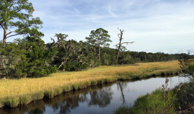 Salt marsh at the north end of Jekyll Island