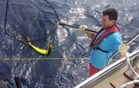 Our Mahi in the net