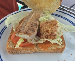 Pan-seared Mahi sandwich on fresh bread