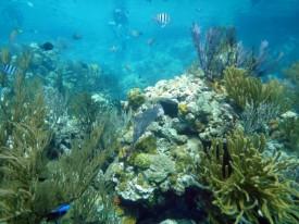 The Sea Aquarium