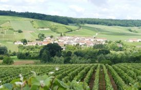Vineyards in the Marne Valley