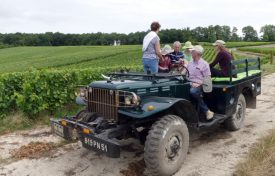 Our vineyard tour in the Dodge